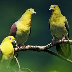 Siju Bird Sanctuary in Tura