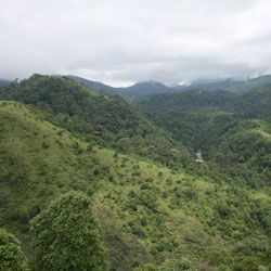 Silent Valley National Park in Palakkad