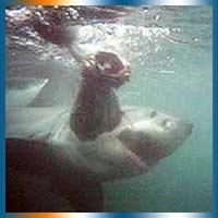 Snorkeling in South Africa in Kwazulu Natal