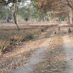 Sonai Rupai Wildlife Sanctuary in Tezpur