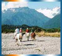 South Westland Horse Treks in West Coast