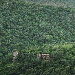 Sri Venkateswara National Park in Tirupati