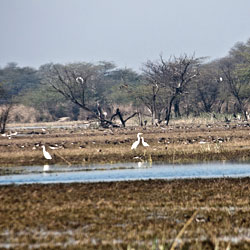 Sultanpur Bird Sanctuary in Gurgaon
