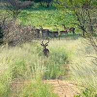 Tachila Nature Reserve in Francistown