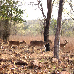 Tadoba National Park in Chandrapur