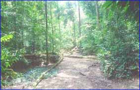 Taman Negara National Park in Sabah