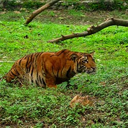 Tata Steel Zoological Park in Jamshedpur