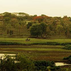 Telankhedi Garden in Nagpur