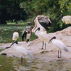 Thattekad Bird Sanctuary in Ernakulam