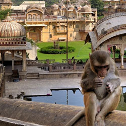 The Monkey Temple in Jaipur