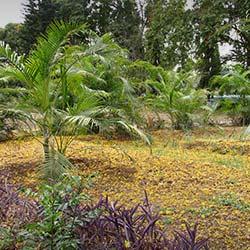 TNAU Botanical Garden in Coimbatore