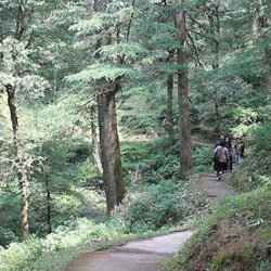 Trekking in Chail in Chail