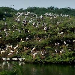 Uppalapadu Nature Conservation in Guntur