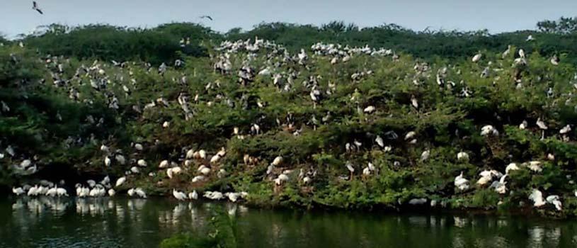 Uppalapadu Nature Conservation