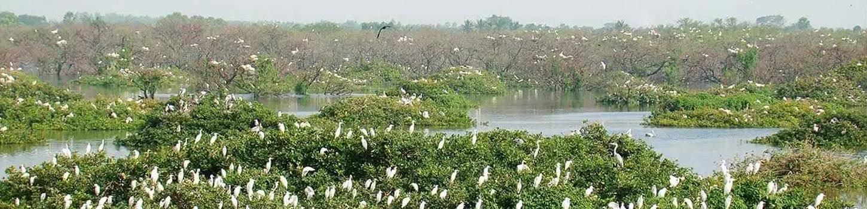 Vedanthangal Bird Sanctuary 2