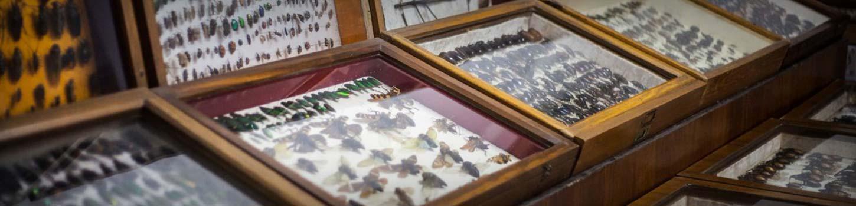Wankhar Entomology Museum