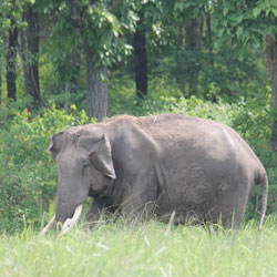 Wayanad Wildlife Sanctuary in Wayanad