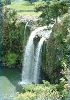 Whangarei Falls in Whangarei