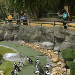 Zoological Garden in Jaipur