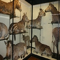 Zoological Museum in Jaunpur