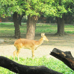 Zoological Park in Delhi