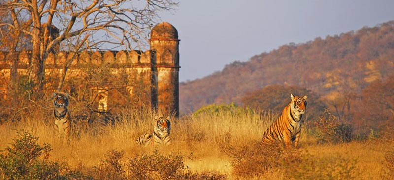 Tiger Reserve Tour Package