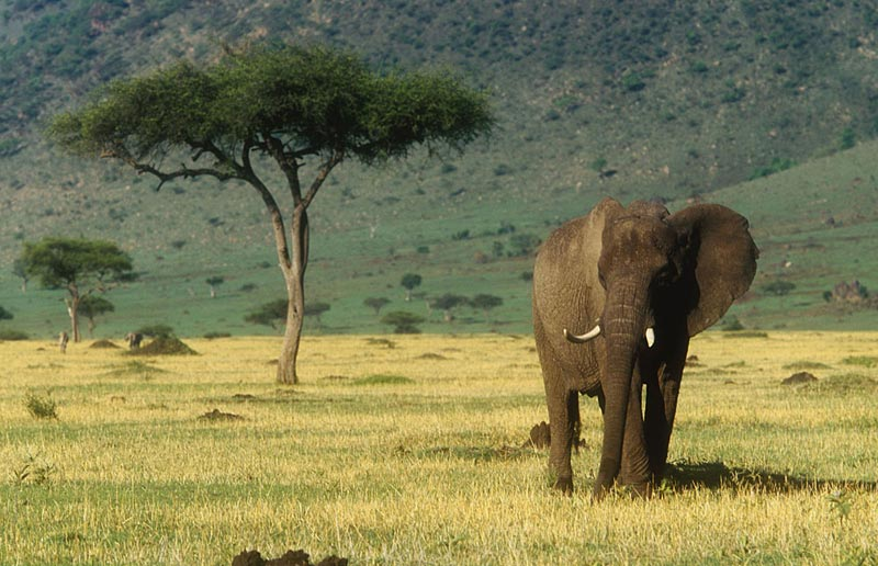 6 Days Tsavo East, West, Amboseli Tour