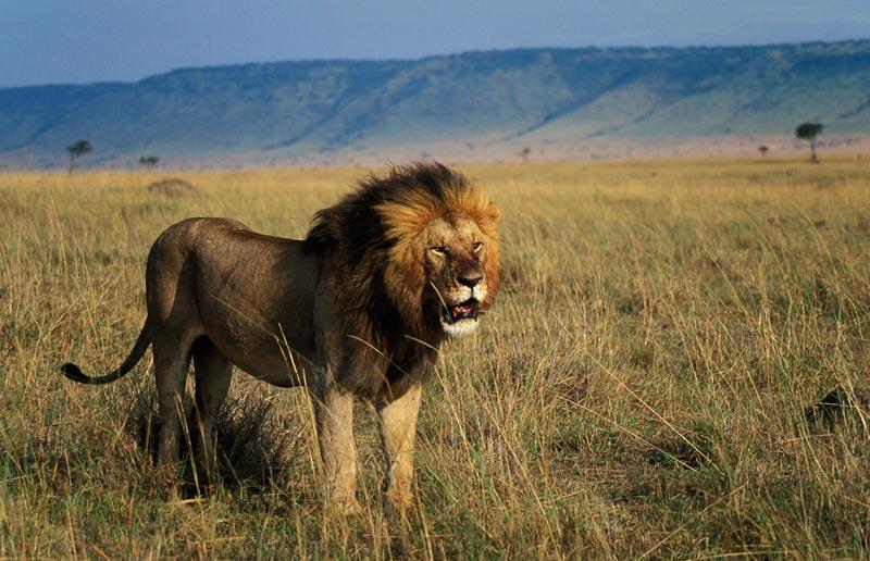 3 Days Ngorongoro - Lake Manyara Tour