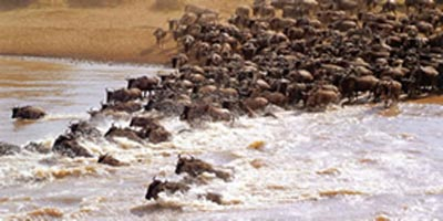 8 Days Samburu Aberdares, Lake Nakuru, Lake Naivasha, Masai Mara
