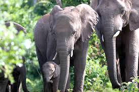 6 Days Amboseli /Tsavo West/Tsavo East Mombasa Luxury Lodge Safari Tour