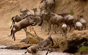 4 Days Masai Mara Lake Nakuru National Park Tour