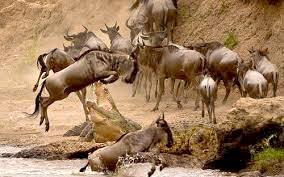 8 Days Aberdares - Samburu - Sweet Waters - Lake Nakuru - Maasai Mara Wildlife Lodge Safari Tour