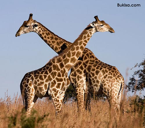 360 Kenya Safari Packages