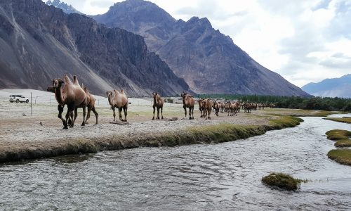 Ladakh With Nubra Stay Tour
