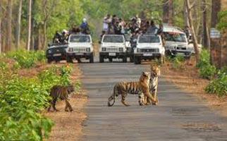 Tadoba Tour From Nagpur