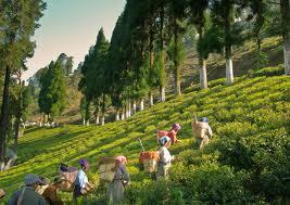 Budget Tour To Darjeeling