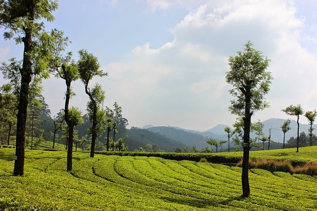 Short And Best Kerala Tour