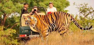 GUJARAT WILDLIFE TOUR - I (7N/8D)