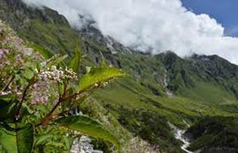 Valley Of Flowers Ex Dehradun Package