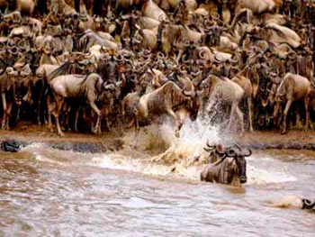 8 Days Amboseli/Lake Nakuru/Masai Mara Wildlife Lodge Safari Package