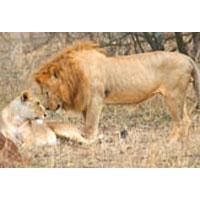Serengeti Camping Safari - Tanzania Tour Package