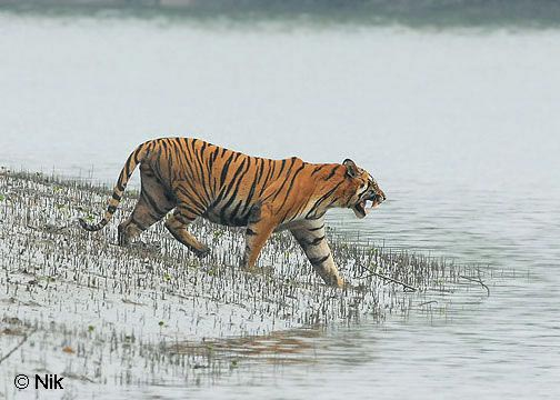 Sundarbans Forest Tour