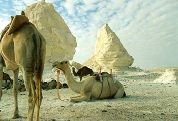 White Desert And El Bahariya Oasis Package 3 Days/2 Nights
