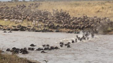 Masai Mara Tour - 3 Days 2 Nights