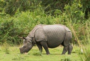 Wildlife Tour Of Assam & Arunachal Tour