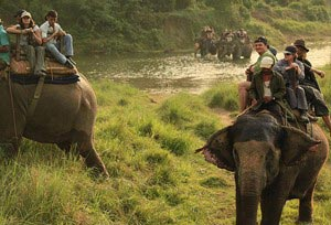 Wildlife Of North East India And Nepal Tour