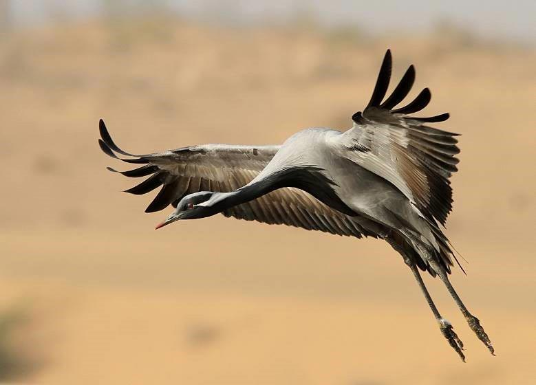 Bird Watching Tour Of Rajasthan