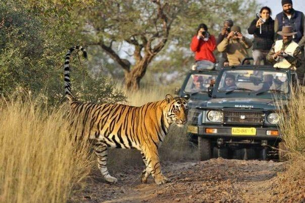 Rajasthan - Tiger Safari Tour Package