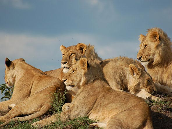 Four Days Three Nights Maasai Mara Tour