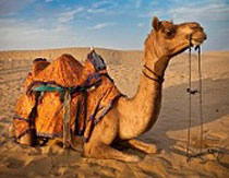 The Safari - Rajasthan Tour